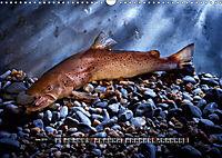 OUR FISH. FRESHWATER. (Wall Calendar 2019 DIN A3 Landscape) - Produktdetailbild 6