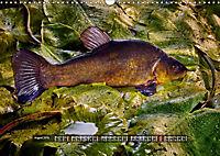 OUR FISH. FRESHWATER. (Wall Calendar 2019 DIN A3 Landscape) - Produktdetailbild 8