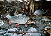 OUR FISH. FRESHWATER. (Wall Calendar 2019 DIN A3 Landscape) - Produktdetailbild 1