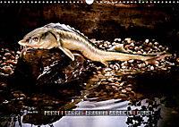 OUR FISH. FRESHWATER. (Wall Calendar 2019 DIN A3 Landscape) - Produktdetailbild 5
