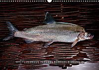 OUR FISH. FRESHWATER. (Wall Calendar 2019 DIN A3 Landscape) - Produktdetailbild 9