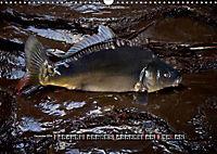 OUR FISH. FRESHWATER. (Wall Calendar 2019 DIN A3 Landscape) - Produktdetailbild 12
