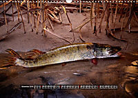 OUR FISH. FRESHWATER. (Wall Calendar 2019 DIN A3 Landscape) - Produktdetailbild 11