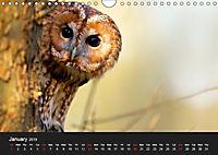 Owls (Wall Calendar 2019 DIN A4 Landscape) - Produktdetailbild 1