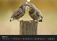 Owls (Wall Calendar 2019 DIN A4 Landscape) - Produktdetailbild 5