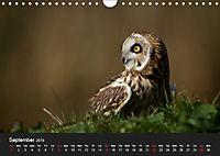 Owls (Wall Calendar 2019 DIN A4 Landscape) - Produktdetailbild 9