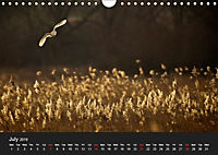 Owls (Wall Calendar 2019 DIN A4 Landscape) - Produktdetailbild 7