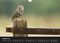 Owls (Wall Calendar 2019 DIN A4 Landscape) - Produktdetailbild 10
