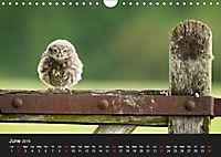 Owls (Wall Calendar 2019 DIN A4 Landscape) - Produktdetailbild 6