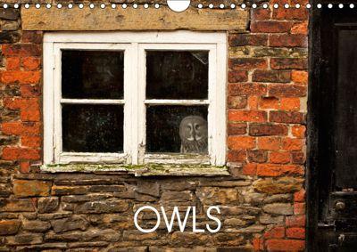 Owls (Wall Calendar 2019 DIN A4 Landscape), mark bridger