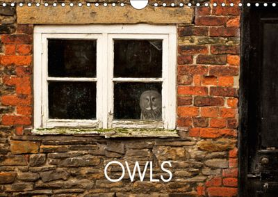 Owls (Wall Calendar 2019 DIN A4 Landscape), mark bridger