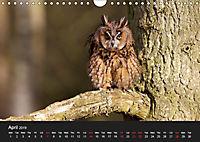 Owls (Wall Calendar 2019 DIN A4 Landscape) - Produktdetailbild 4