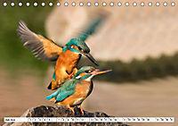 Paarung in der Tierwelt (Tischkalender 2019 DIN A5 quer) - Produktdetailbild 1