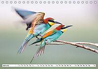 Paarung in der Tierwelt (Tischkalender 2019 DIN A5 quer) - Produktdetailbild 7