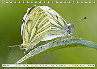 Paarung in der Tierwelt (Tischkalender 2019 DIN A5 quer) - Produktdetailbild 10