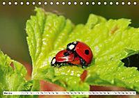 Paarung in der Tierwelt (Tischkalender 2019 DIN A5 quer) - Produktdetailbild 13