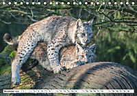 Paarung in der Tierwelt (Tischkalender 2019 DIN A5 quer) - Produktdetailbild 11