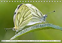 Paarung in der Tierwelt (Tischkalender 2019 DIN A5 quer) - Produktdetailbild 4