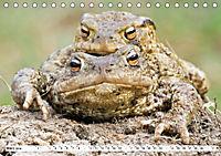 Paarung in der Tierwelt (Tischkalender 2019 DIN A5 quer) - Produktdetailbild 3