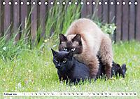 Paarung in der Tierwelt (Tischkalender 2019 DIN A5 quer) - Produktdetailbild 2