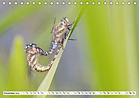 Paarung in der Tierwelt (Tischkalender 2019 DIN A5 quer) - Produktdetailbild 12