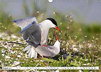 Paarung in der Tierwelt (Wandkalender 2019 DIN A3 quer) - Produktdetailbild 8