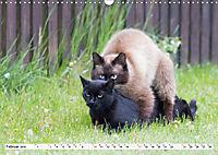 Paarung in der Tierwelt (Wandkalender 2019 DIN A3 quer) - Produktdetailbild 2