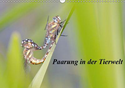 Paarung in der Tierwelt (Wandkalender 2019 DIN A3 quer), Wilfried Martin