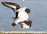 Paarung in der Tierwelt (Wandkalender 2019 DIN A3 quer) - Produktdetailbild 1