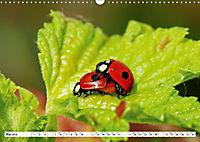 Paarung in der Tierwelt (Wandkalender 2019 DIN A3 quer) - Produktdetailbild 5