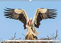 Paarung in der Tierwelt (Wandkalender 2019 DIN A3 quer) - Produktdetailbild 10