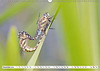 Paarung in der Tierwelt (Wandkalender 2019 DIN A3 quer) - Produktdetailbild 12