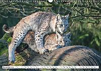 Paarung in der Tierwelt (Wandkalender 2019 DIN A3 quer) - Produktdetailbild 11