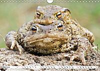 Paarung in der Tierwelt (Wandkalender 2019 DIN A4 quer) - Produktdetailbild 3