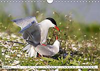 Paarung in der Tierwelt (Wandkalender 2019 DIN A4 quer) - Produktdetailbild 8