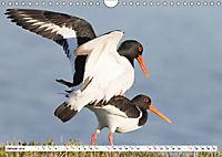 Paarung in der Tierwelt (Wandkalender 2019 DIN A4 quer) - Produktdetailbild 1