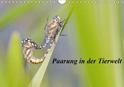 Paarung in der Tierwelt (Wandkalender 2019 DIN A4 quer), Wilfried Martin