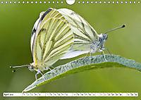 Paarung in der Tierwelt (Wandkalender 2019 DIN A4 quer) - Produktdetailbild 4