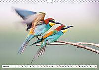 Paarung in der Tierwelt (Wandkalender 2019 DIN A4 quer) - Produktdetailbild 6