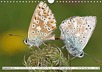 Paarung in der Tierwelt (Wandkalender 2019 DIN A4 quer) - Produktdetailbild 9
