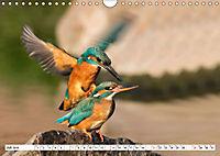 Paarung in der Tierwelt (Wandkalender 2019 DIN A4 quer) - Produktdetailbild 7