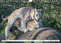 Paarung in der Tierwelt (Wandkalender 2019 DIN A4 quer) - Produktdetailbild 11