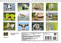 Paarung in der Tierwelt (Wandkalender 2019 DIN A4 quer) - Produktdetailbild 13