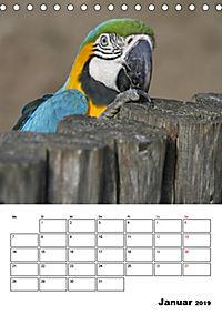 Papageien - Graupapagei, Rosella und Co. (Tischkalender 2019 DIN A5 hoch) - Produktdetailbild 1