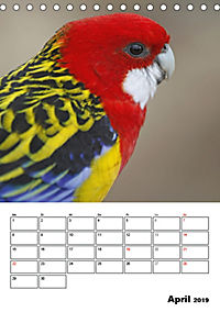 Papageien - Graupapagei, Rosella und Co. (Tischkalender 2019 DIN A5 hoch) - Produktdetailbild 4
