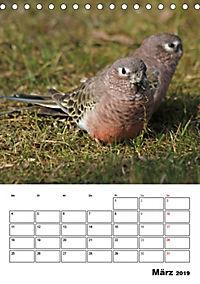 Papageien - Graupapagei, Rosella und Co. (Tischkalender 2019 DIN A5 hoch) - Produktdetailbild 3