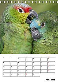 Papageien - Graupapagei, Rosella und Co. (Tischkalender 2019 DIN A5 hoch) - Produktdetailbild 5