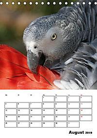 Papageien - Graupapagei, Rosella und Co. (Tischkalender 2019 DIN A5 hoch) - Produktdetailbild 8
