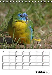 Papageien - Graupapagei, Rosella und Co. (Tischkalender 2019 DIN A5 hoch) - Produktdetailbild 10