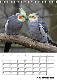 Papageien - Graupapagei, Rosella und Co. (Tischkalender 2019 DIN A5 hoch) - Produktdetailbild 11